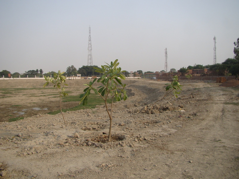 Plantation at the Kund
