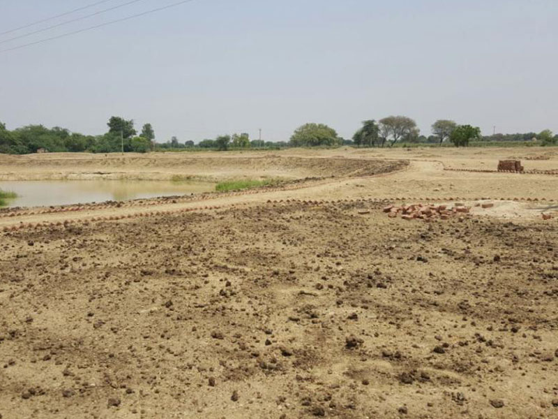 Organic manure being layed at Brahma Jhadi