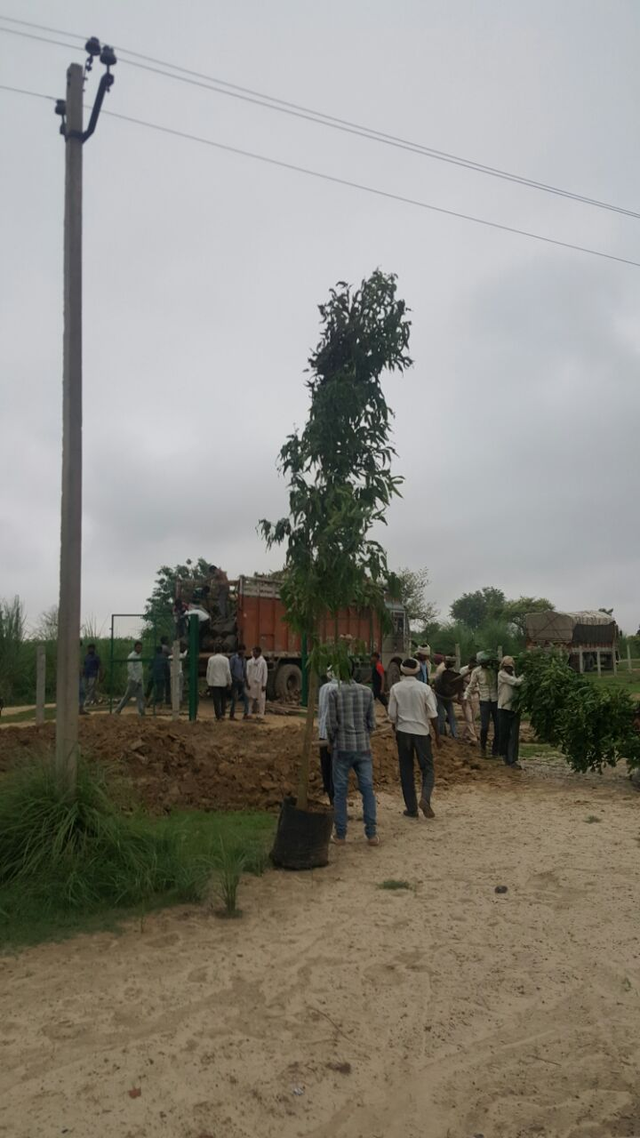 Trees being planted at the site