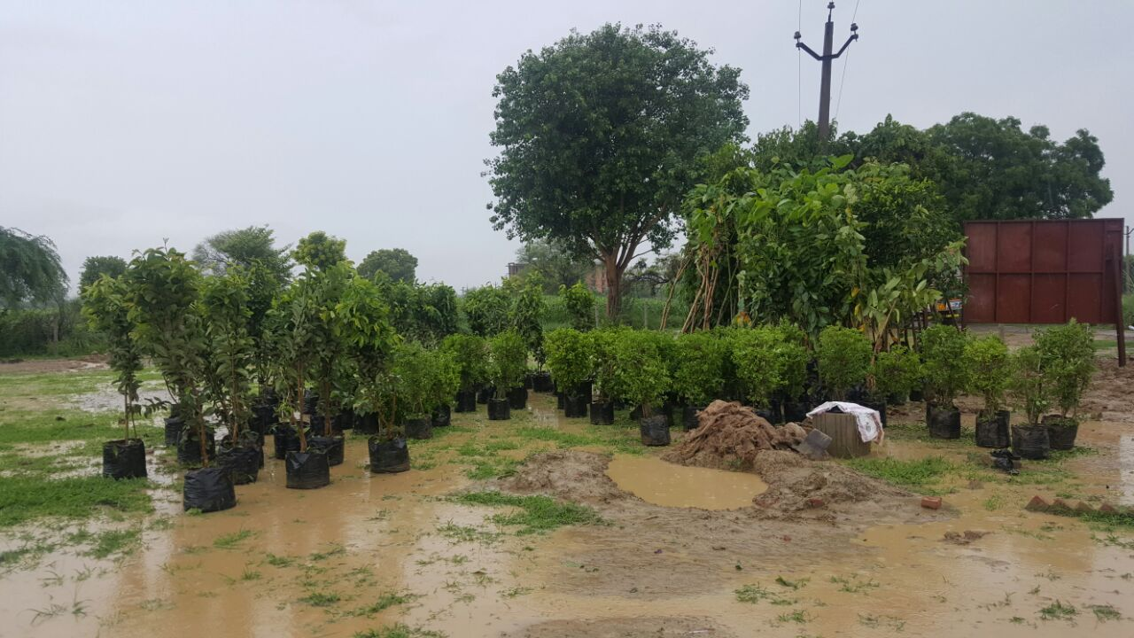 Trees of different variety for plantation at the site